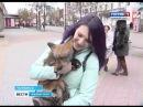 Антимеховой марш в Челябинске