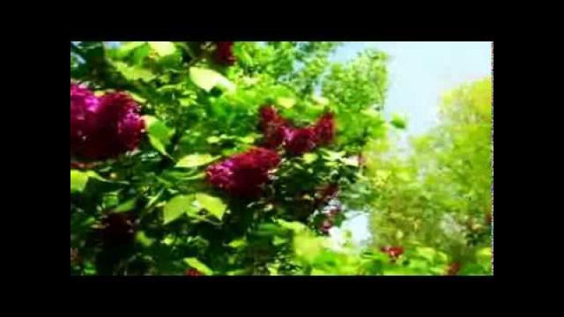 Ретро - танго Куст сирени (клип)