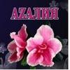 """AZAЛИЯ"" 725-752  Сыктывкар"