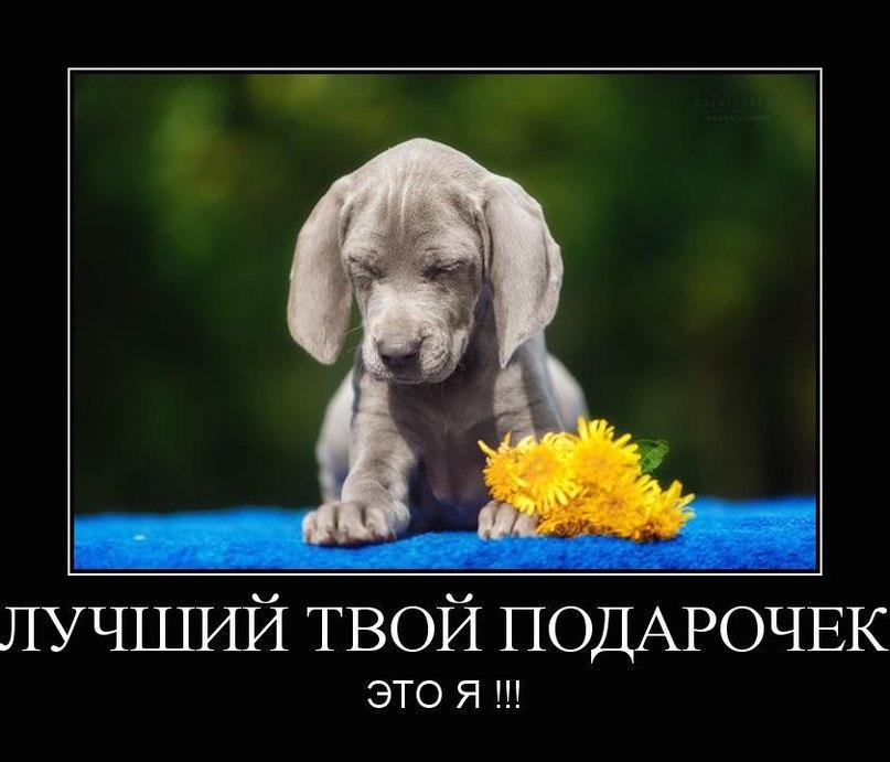 Tatiana Doggy  