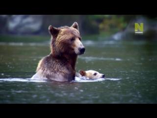 BBC. Нетронутые уголки дикой природы. Серия 07. Прибрежные леса Канады.