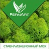 FernArt - Стабилизационный мох