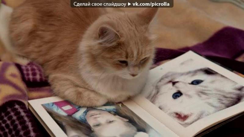 Егор Крид - О Боже, мама, мама, я схожу с ума . И котэ.