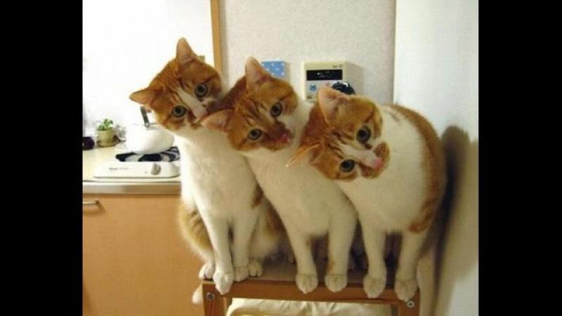 Śmieszne koty [9]
