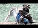 Тигр в Тбилиси убил человека! Тигр альбинос загрыз насмерть!