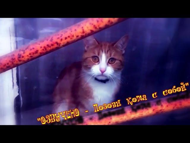ILUMILAND - Позови кота с собой.