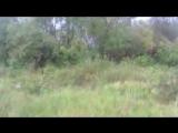 охота со спаниелем на куропатку_low