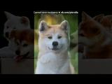 «Акита - Ину» под музыку Dooplett - Хатико... Picrolla