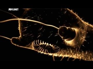 Войны жуков-гигантов Monster bug wars 9 серия