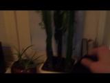 коротко о моих комнатных растениях