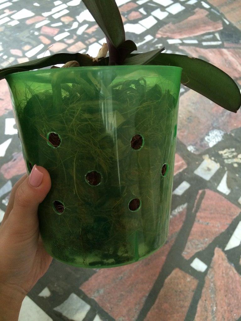 зеленый дом удобрение для орхидей инструкция по применению