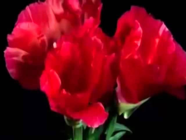 Забытый танец самая лучшая музыка музыка для души красивая музыка