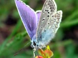 Gato Barbieri - Butterfly.mp4