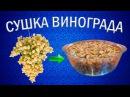 Как приготовить изюм из винограда кишмиш Сушилка для овощей и фруктов Ezidri