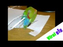 Parrot Builds a New Tail Using Paper