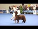 «Танец куклы» Марии Новоселова и ее пес на шоу «Евразия-2012»