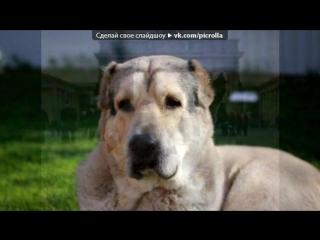 «Со стены Собаки - Dogs.ru» под музыку Собачье сердце - Как то странно случилось в век безумного бега.Кто-то там перепутал , и