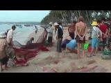 Пляж Муйне, Фантьет, Вьетнам - Mui Ne Beach, Fantyet, Vietnam