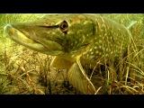 Щука каннибал? Атака на рыболовные комбинированные приманки под водой!
