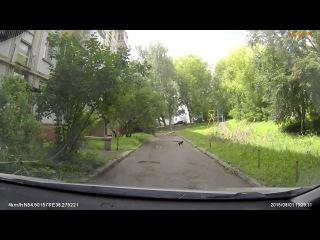 Черный кот хотел перебежать через дорогу