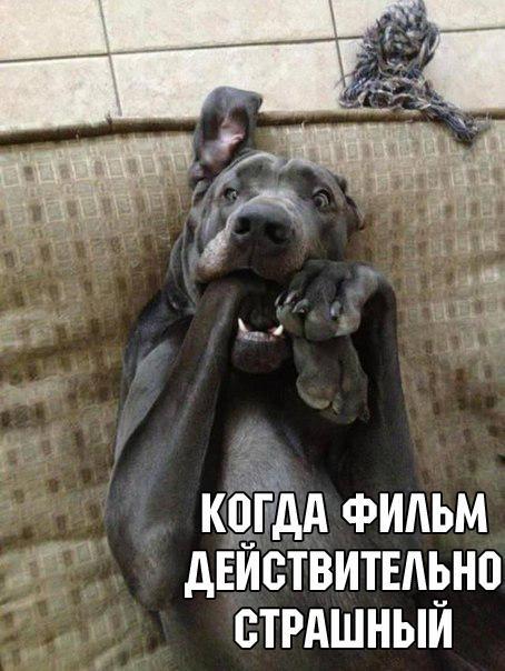 Лайк:)