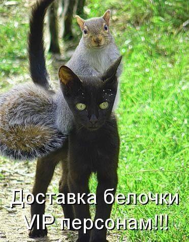 http://cs628128.vk.me/v628128550/175a1/6O6X-BjdSsw.jpg