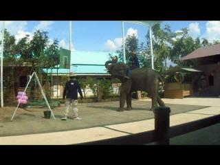 Слон забрасывает мяч в баскетбольное кольцо
