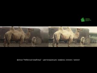 Несколько обработанных планов из фильма Небесный верблюд