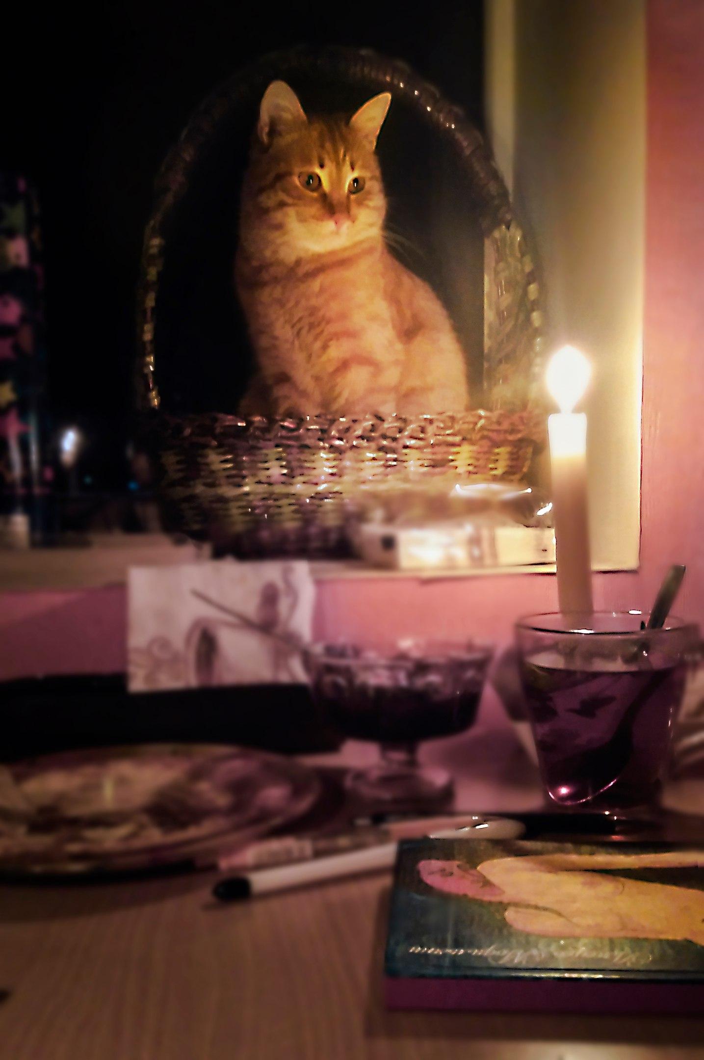 Мой кот Яндекс