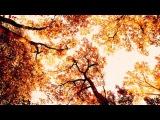 Дима Билан || Листья праздничных клёнов