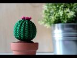 Tutorial Cactus rotondo amigurumi