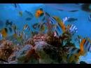 Suok fish