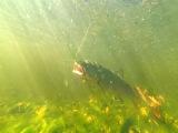 Ярцевский марафон №2. Супер рыбалка в дикой тайге вдалеке от цивилизации.