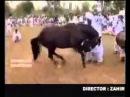 Лошадь танцует лезгинку в египте