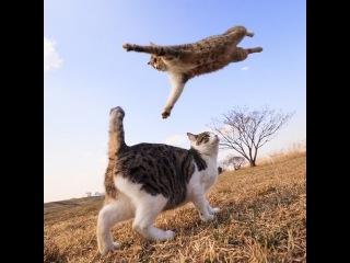 Коты - каратисты (Cat Karate)