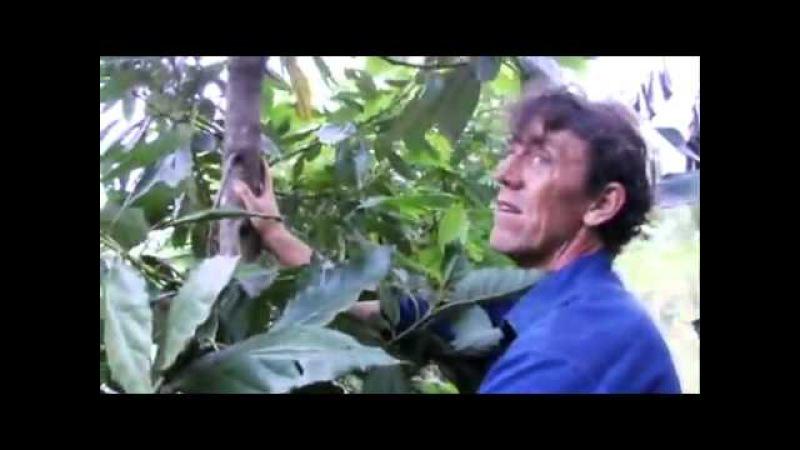 Создание лесосада с Джефом Лотоном