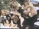 Язык животных.Ф. Соболев 1967