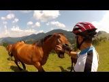 Нападения лошадей. Horses vs people.
