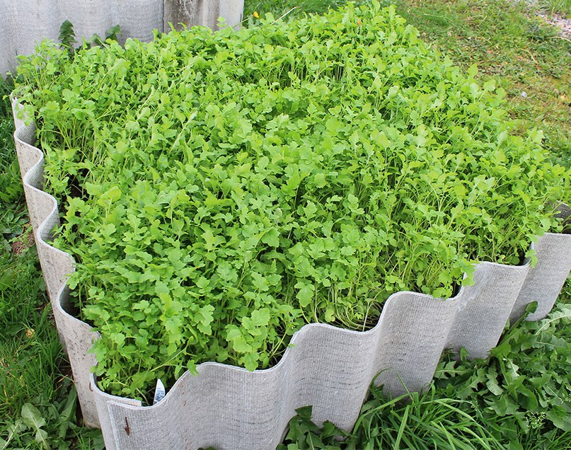Морковь без проблем, подготовка семян и посадка моркови
