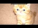 Толстый мой претолстый мой жирный кот песня скачать