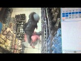 Женщина бьёт ребенка в магазине Череповца 2016.Видео с камеры наблюдения.