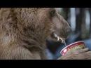 Рекламный ролик Doshirak Медведь