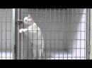 Кот Взломщик \ Cat Jailbreak \ Кошка открывает дверь сама)