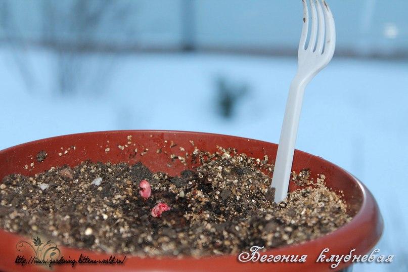 Февраль. Общие рекомендации по работе в саду и дома