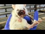 Торговля животными. Правда за 60 секунд  (русская озвучка)