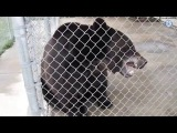 Как животные сходят с ума. Правда за 60 секунд (русская озвучка)
