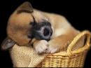 Очень смешные видео про котов и собачек с маленькими детками Funny baby Funny animals Funny dogs