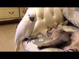 Кот и красивый попугай