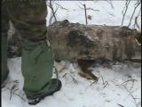 Охота на куницу с лайками