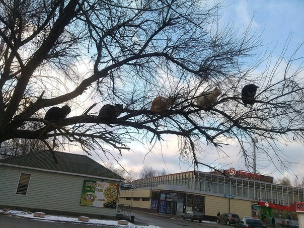 Климкин призвал главу МККК усилить мониторинг условий содержания заключенных на территории ОРДЛО, Крыма и РФ украинцев - Цензор.НЕТ 6359